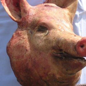 К чему снится отрубленная свиная голова 457