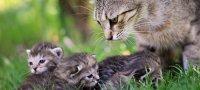 Сонник: к чему снится, что кошка родила котят, окотилась?