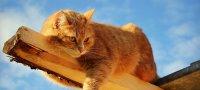 К чему снится умерший кот – сонник