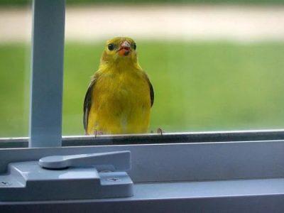 Примета: птица ударилась в окно и улетела, к чему это?