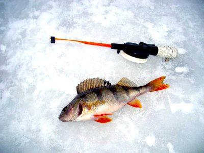 К чему снится рыбалка мужчине и женщине – сонник