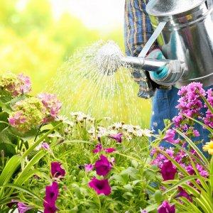 Сонник толкование поливать цветы