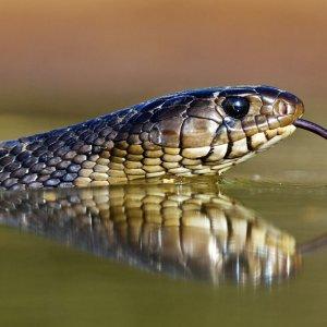 К чему снится змея в воде толкование сонников