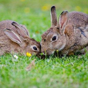 К чему снятся кролики (живые, белые, черные, маленькие, серые) женщине и мужчине – сонник