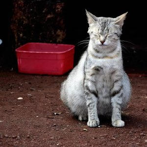 Сонник беременная Кошка ? приснилась, к чему снится беременная Кошка во сне видеть?