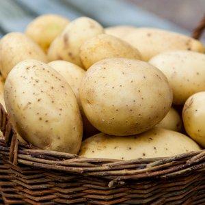 Сонник картошка сырая крупная