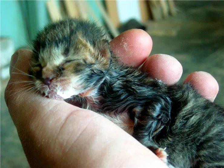 К чему снится мёртвый котёнок: толкования по сонникам