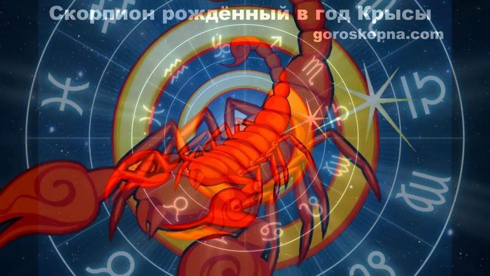 Скорпион, рожденный в год Быка: характеристика знака, карьера и совместимость