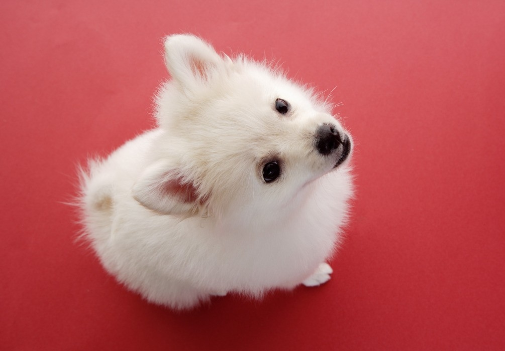 К чему снится маленькая собачка согласно различным сонникам