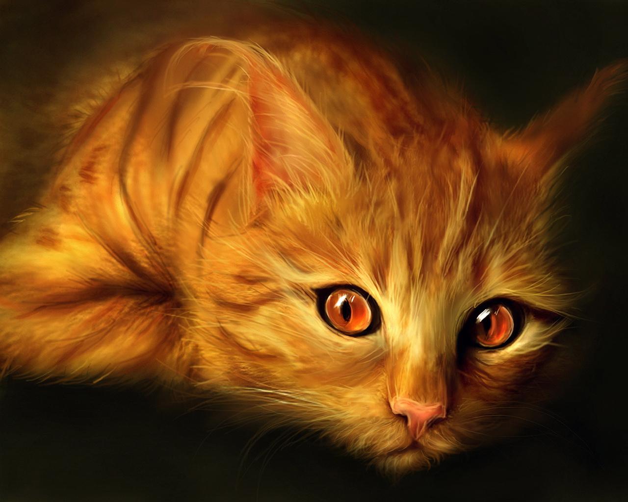 Рыжие коты в доме: народные приметы и предупреждения