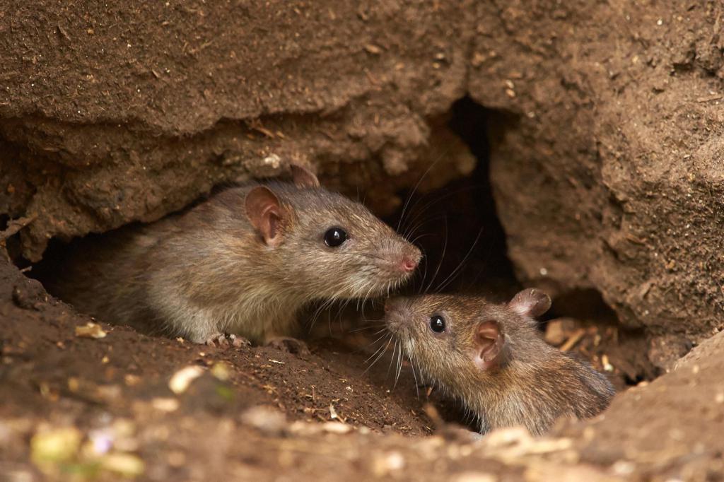 2008 — год Земляной Крысы по восточному календарю