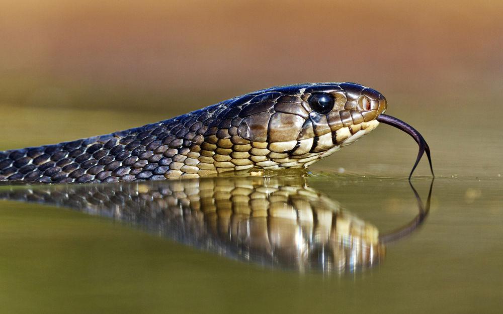 Снится змея в воде: толкование в популярных сонниках